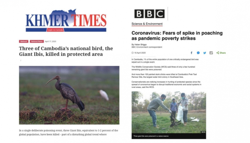 Cambodia's critically endangered giant Ibis poisoned during the global pandemic.